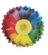 "26"" Rainbow Sunflower Balloon"