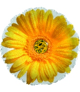"17"" Yellow Gerbera Flower Foil Balloon"